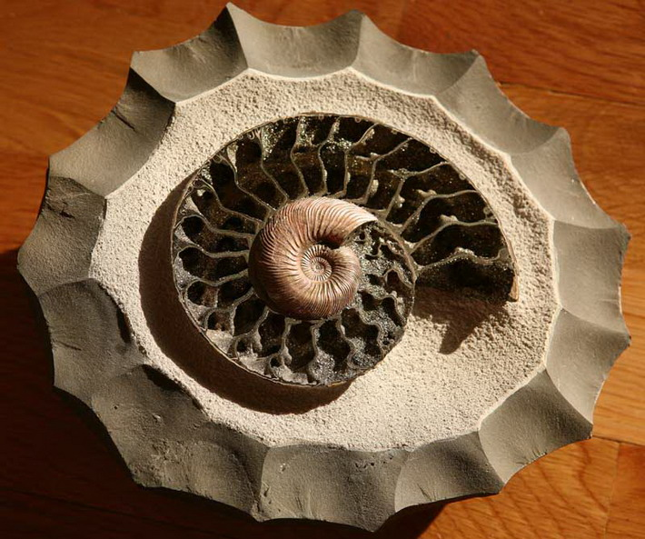 What is a fossil?