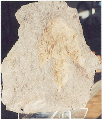What is a fossil? Dinosaur Footprint - trace fossil.